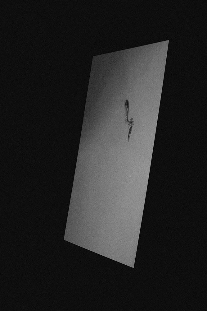 laimos-kunas-ir-tamsa (11)
