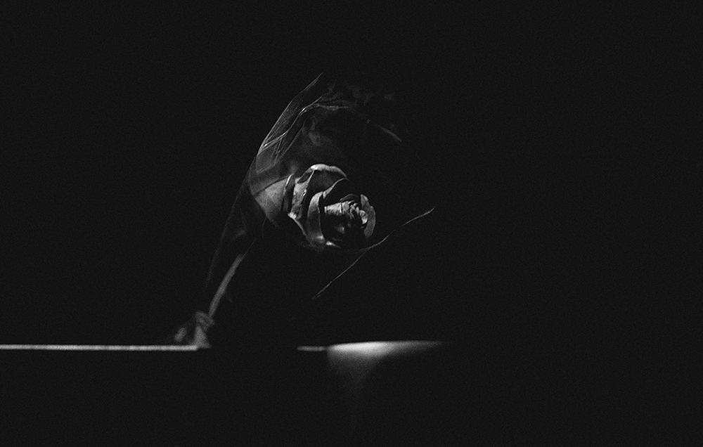 laimos-kunas-ir-tamsa (19)